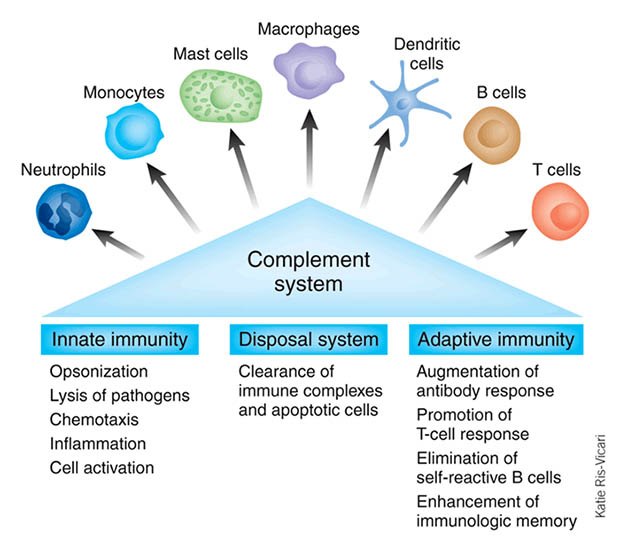 complement_system