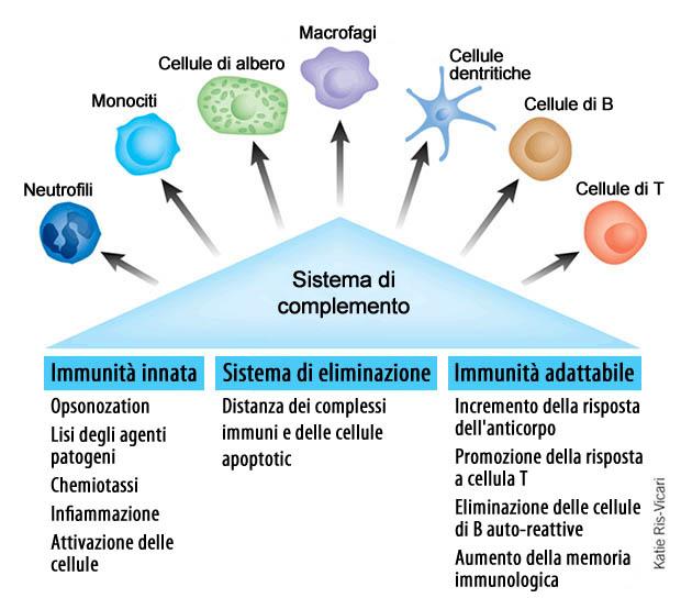 sistema_di_complemento